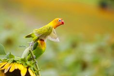 Fly ~ ~ ~ Parrot. by Julia Cory  ™