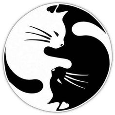 WHAT'S IN THE BOX 1 yin yang cat car decal. DESIGN 2 color options to choose from: white and black (colors may vary). NOTE: White may appear silver- shines white at night because it's made of reflecti Cat Stickers, Cat Drawing, Art Plastique, Crazy Cats, Rock Art, Cat Art, Cats And Kittens, Siamese Cats, Kitty Cats