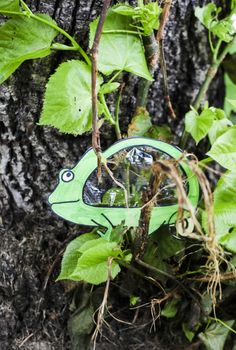 """Chameleon craft - Make a clear Chameleon, that """"adapts"""" to its surroundings!"""