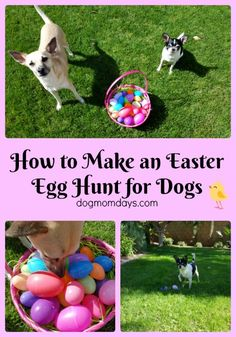 How to make an Easter egg hunt for dogs! Easter   Dogs   Dog Friendly   Dog Activities   Easter for Dogs   Easter Egg Hunt for Dogs   Dog Mom   Dog Mom Days  