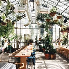 Lunching in a green house.