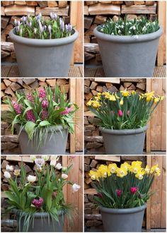 Patio, Garden, Plants, Decor Ideas, Balcony, Garten, Lawn And Garden, Gardens, Plant