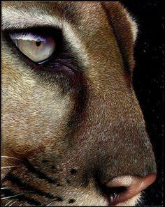 Puma. Beautiful!
