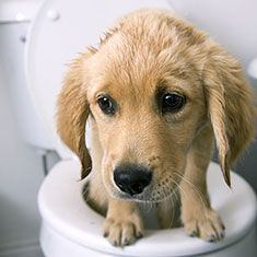 how to clean up dried dog diarrhea