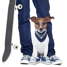 Photographic Print: Dog Owner and Dog by Javier Brosch : Passion For Life, Real Dog, Dog Poster, Real Friends, Hotel Spa, Dog Owners, Skateboard, Photo And Video, Dogs