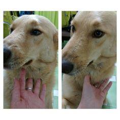 Cutieeee #dog