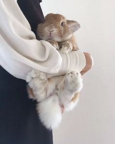 Any bunny that are cute. See more ideas about Cute rabbits Tags: Any bunny that are Cute Baby Bunnies, Baby Animals Super Cute, Cute Little Animals, Cute Funny Animals, Cute Cats, Pet Bunny Rabbits, Cute Bunny Pictures, Cute Animal Videos, Fluffy Animals