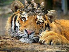 Big and small kitties