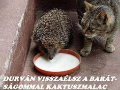 you share your milk with him and nothing else matters Animals And Pets, Funny Animals, Cute Animals, Animal Pictures, Funny Pictures, Interesting Animals, Son Luna, Exotic Pets, Exotic Animals