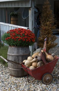 "gourds and mums - ""Harvest Time at the Farm 2013"" Saltbox farm, Howard City, MI."