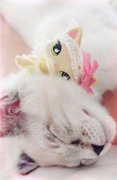 Cute LPS w/ cat
