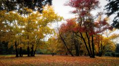 autumn day - null