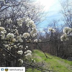 #Repost @sanctuary.p with @repostapp.  #heardtexas #heardmuseum  #trail #park #prairie #grasslands #prairies #sun #sunshine #colorful #color #colors #texas #tx #naturelovers #nature_perfections #nature #trees #tree #springtime #sky #spring #bloom