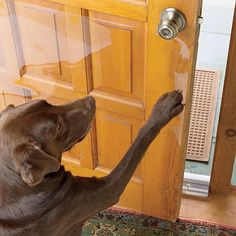 Just found this Prevent Dog Scratching Door - Door Scratching Shield -- Orvis on Orvis.com!
