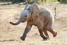 """""""Run, run, as fast as you can! You can't catch me I'm the elephant fan!"""""""