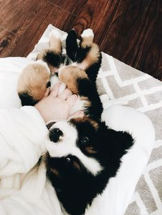 """""""Uploaded by Chelsea Ashman - Life size Teddy the Bernese mountain dog"""" Cute Baby Dogs, Cute Dogs And Puppies, Cute Baby Animals, I Love Dogs, Animals And Pets, Funny Animals, Doggies, Tier Fotos, Cute Creatures"""