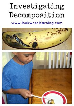 Decomposition Lesson Ideas - Look! We're Learning! (Elementary STEM)