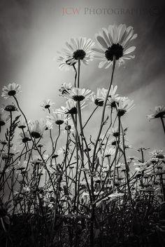 daisy feild, via Flickr.