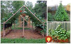 Záhradkári sa podeli o osvedčené nápady, ako pestovať uhorky, cuketu a tekvicu. Vedeli ste, že tieto popínavé druhy zeleniny, môžu byť skvelou zábavou pre vaše deti (uhorkové stany), ale dokonca vám môžu záhradu skrášliť či poskytnúť vám tieň a súkromie. Navyše, ide o perfektný nápad, ako predchádzať vzniku plesni, eliminovať problém so škodca a získať...