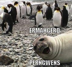 1000 images about eramhgerd animals on pinterest