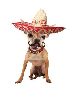 Dog Halloween, how cute !        Tag Someone Who Would Love This French PitBull ! Tag: #dog ,#dogslover , #funnydog #dog #lovedogs #doggy #doglife #mydog #dogs #ilovemydog #doglover #dogoftheday #frenchbulldog #bulldog #nationaldogday #dogsitting #instadogs #doglove #happydog #lovemydog #dogslife #englishbulldog #husky #huskylove #doggie #cutedog #dogtraining #dogpark #doglovers #doggies #dogmodel #doglife #instadogs #pitbull #halloween ------------ If you love this and want image…