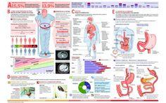 La epidemia del siglo XXI: #obesidad