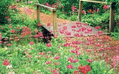 plants for bog gardens - Google Search