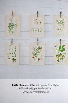 botanical drawings display #stylecure