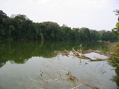 10 day trip on the amazone, in the manu reservation, rainforest