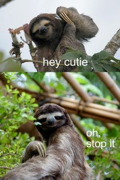 Sloths are just too cute to me, and I honestly don't know why..