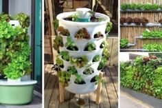 vertical-vegetable-garden-ideas-640x306