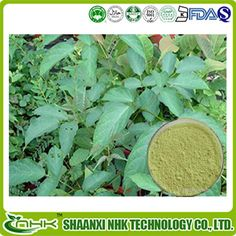 Chrysin	  http://www.gmp-factory.com/herbal-medicine/anti-tumor/chrysin.html  http://www.gmp-factory.com/herbal-medicine/antiviral-/radix-isatidis-extract.html
