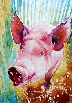 watercolour pig     Carol Carter.... painting  #pink                                                                                                                                                                                 More