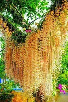 Amazing Unusual Plants To Grow In Your Garden Unusual Flowers, Rare Flowers, Amazing Flowers, Orchids Garden, Orchid Plants, Orchid Tree, Unusual Plants, Exotic Plants, Orquideas Cymbidium