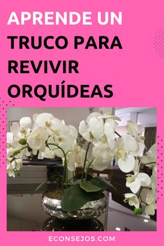 How To Keep Orchids Alive And Looking Gorgeous Water Culture Orchids, Orchids In Water, Growing Orchids, Growing Plants, Small Garden Uk, Easy Garden, Container Gardening, Gardening Tips, Gardening Services