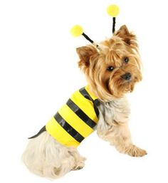 puppy costume pet halloween costumes dog costume pet halloween costumes unique - Halloween Costume For Small Dogs