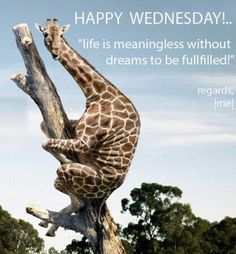 Happy Wednesday quotes quote days of the week wednesday hump day wednesday quotes happy wednesday