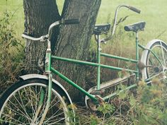 every tree needs a bike to share with a friend:))