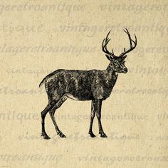 Digital Black Tailed Deer Image Graphic Printable Download Illustration Vintage Clip Art. High quality digital graphic from antique artwork. This printable high resolution digital illustration is excellent for transfers, printing, pillows, and more. Antique artwork. This image is high quality, high resolution at 8½ x 11 inches. Transparent background version included with every graphic.