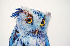 3-illustration-john-pusateri-owl-chouette