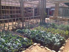 Urban Landscape Solutions - a Cape Town based company offering premier landscaping services. Herb Garden, Vegetable Garden, Landscape Solutions, Landscaping Company, Medicinal Herbs, Urban Landscape, Car Park, Fruit Trees, Cape Town