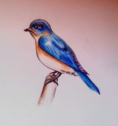 Bluebird  #pencils