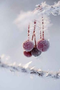 winter in the garden .. X ღɱɧღ ||