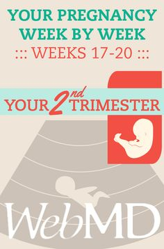 Week 17 Baby:Your baby, now about in its 15th week of development, measures about 4.4 to 4.8 inches from crown to rump and has doubled in weight in the last two weeks to about 3.5 ounces. MORE...