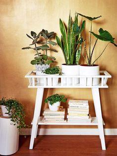 Stora gröna krukväxter, hängande amplar i fönstret, blommande bord och kaktussamlingar. Nu är det gröna tillbaka i inredningen och vi kan inte få nog.