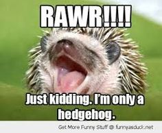 Image result for hedgehogs as pets