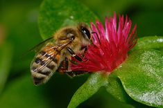 Macro photography of a Bee on a flower by Graham Owen. Beautiful!