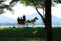 Jaunting Car Tour, Killarney National Park, Killarney, Ireland...a wonderful horse-drawn carriage ride
