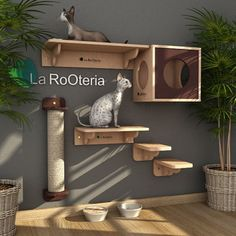 Hotel Gato, Cat Hotel, Animal Room, Animal House, Sphynx, Cat Wall Shelves, Cat Gym, Cat City, Cat Playground
