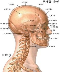 http://blog.naver.com/crossfury1/220075496547  Anatomy 머리